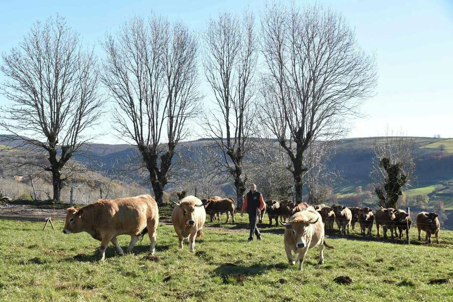 French cattle breeder Thibaut Dijols stands next to Aubrac breed cows on November 17, 2017 in Curieres near Rodez, southern France. Some investors are betting governments around the world will find a way to start taxing meat production as they aim to improve public health and hit emissions targets set in the Paris Climate Agreement. Photo: PASCAL PAVANI /AFP /Getty Images / AFP or licensors