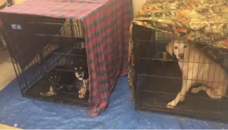These kennels were placed in the break room of the Humane Scoiety of the New Braunfels Area after stagnant adoptions led to cramped conditions. Photo: Contributed Photo