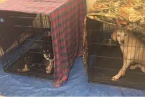 These kennels were placed in the break room of the Humane Scoiety of the New Braunfels Area after stagnant adoptions led to cramped conditions.