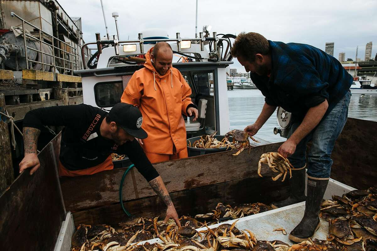 From the left, Brendan Moore, John Buich and Captain Aaron Lloyd unload the Dungeness crab by hand at Pier 45 in San Francisco, Calif. Wednesday, November 15, 2017.