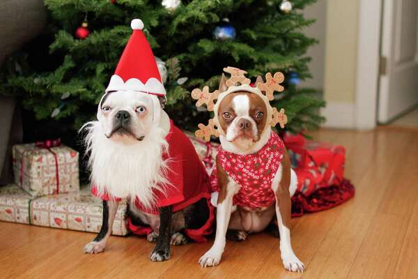 When it comes to gift-giving for my pets, I break it down into three categories. Do they need it? Do they want it? Will they use it?
