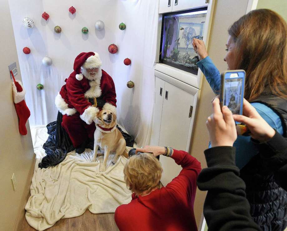Daisy, a six-year-old yellow lab reacts to her owner Claire Tiscornia, of New Canaan, while being photographed with Santa by Julie McGuire, of New Canaan, at High Ridge Animal Hospital in Stamford Dec. 8. Photo: Matthew Brown / Hearst Connecticut Media / Stamford Advocate