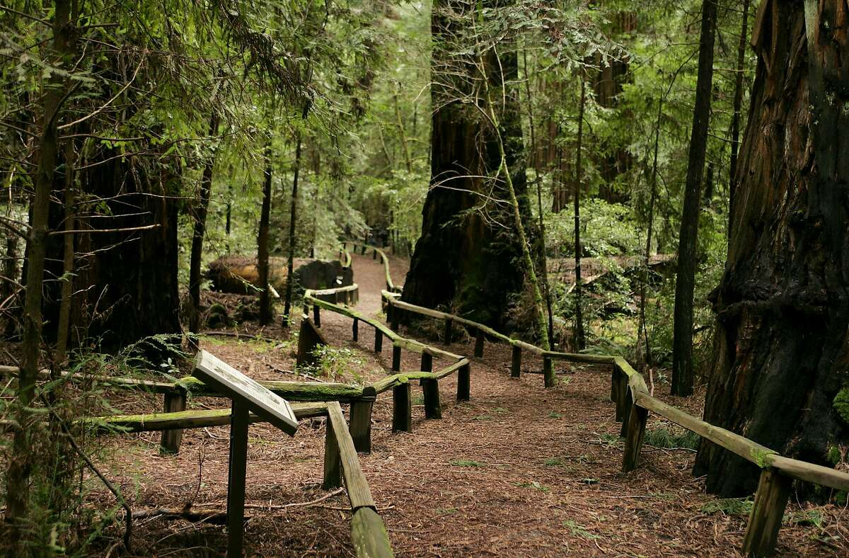 A trail runs through a stand of redwoods in the Richardson Grove State Park along the South Fork of the Eel River just off Highway 101, which is narrow in the area and Caltrans wants to widen it for big trucks.