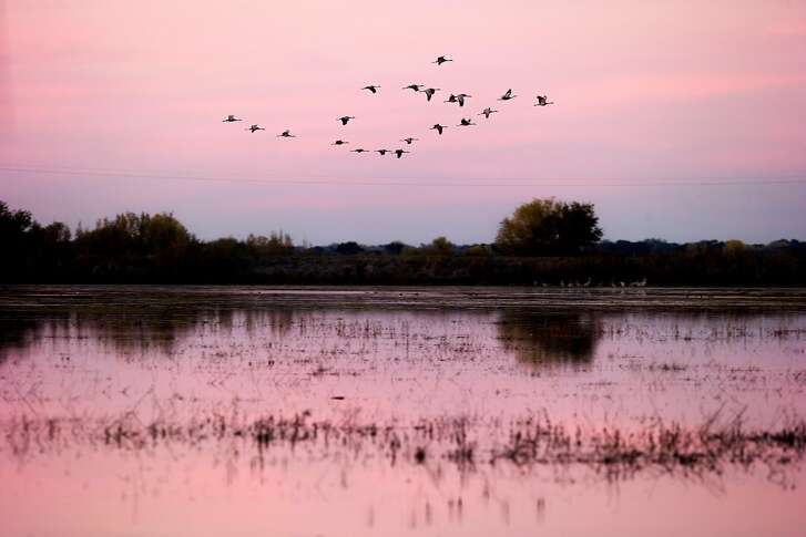 Sandhill cranes fly at the Woodbridge Ecological Reserve on Saturday, Nov. 18, 2017, in Lodi, Calif. The Department of Fish and Wildlife will phase in a state Land Pass over the next three months that will provide access to more than 40 state wildlife areas and ecological reserves to broaden wildlife funding beyond fishermen and hunters.