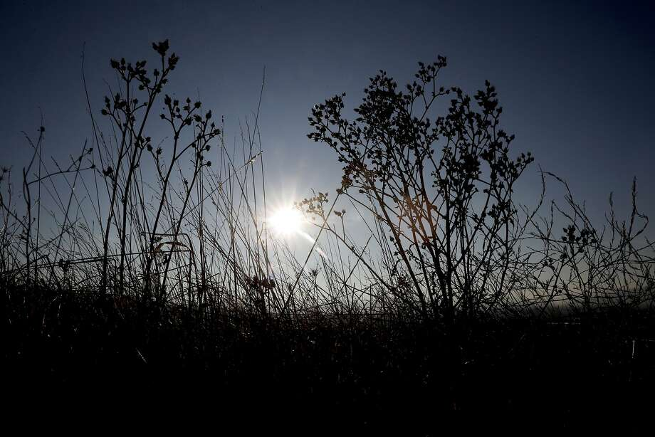 Bright sunshine is on the trails of the Dougherty Hills open space in Dublin. Photo: Michael Macor, The Chronicle