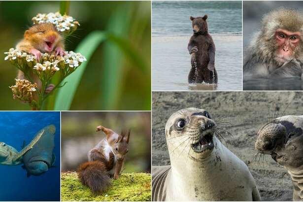 The Comedy Wildlife Photography Awards has announced this year's winners and they are unbelievable hilarious.