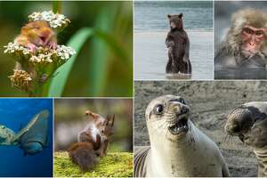 TheComedy Wildlife Photography Awards has announced this year's winners and they are unbelievable hilarious.
