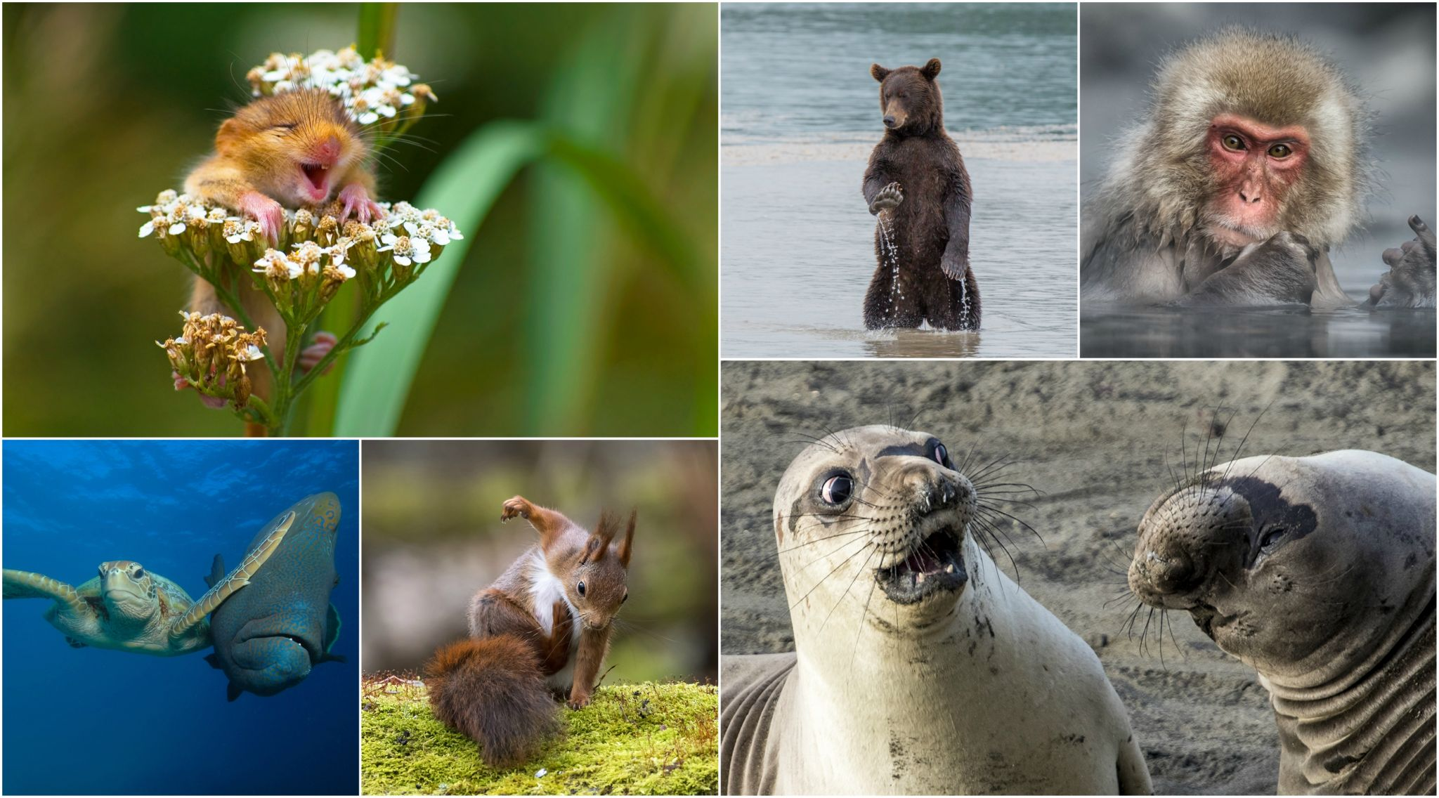 The World's Funniest And Cutest Animal Photos From 2017