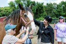 Connecticut Draft Horse Rescue in East Hampton has raised enough funds to purchase property and build a barn at a new location.