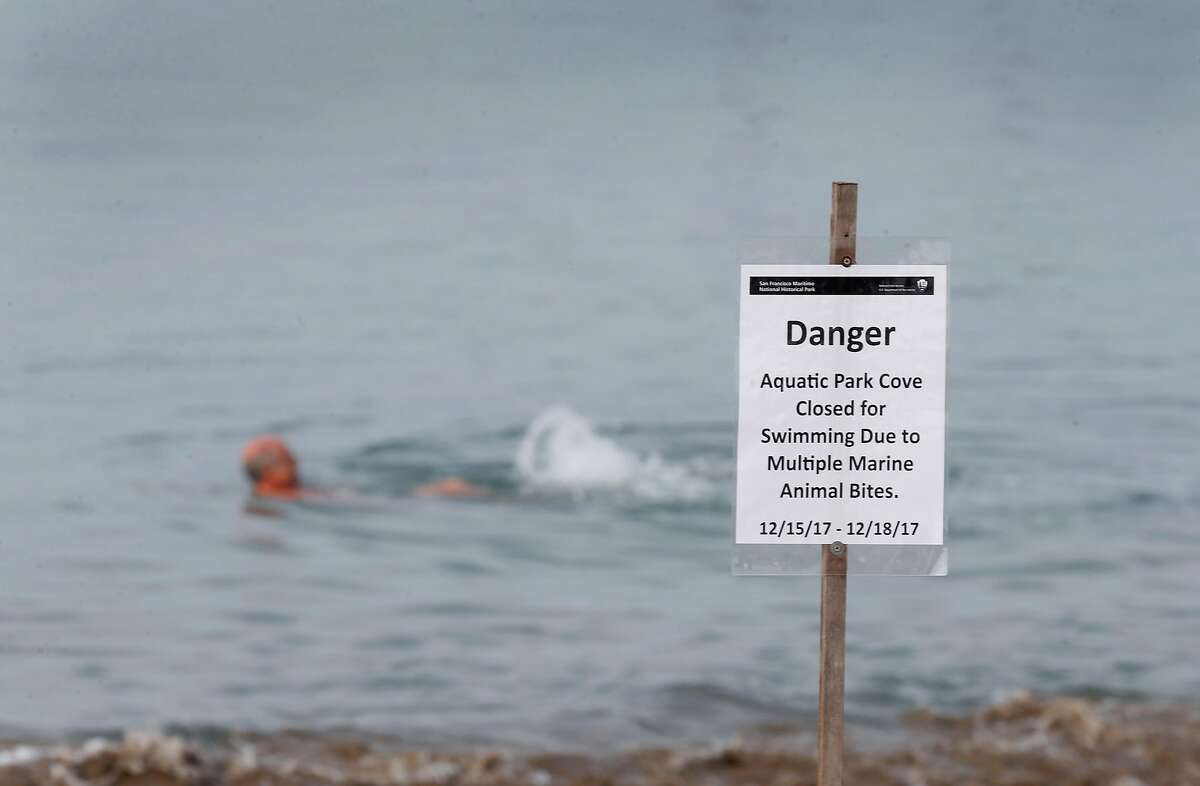 South End Rowing Club member Dorian Lisbona swims in Aquatic Park despite posted signs warning of a second sea lion bite on a swimmer this week in San Francisco, Calif. on Friday, Dec. 15, 2017. However, Lisbona says he was staying close to shore.