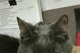The Lumberton Police Department said they were sad to say goodbye to their beloved office cat of 18 years Friday.