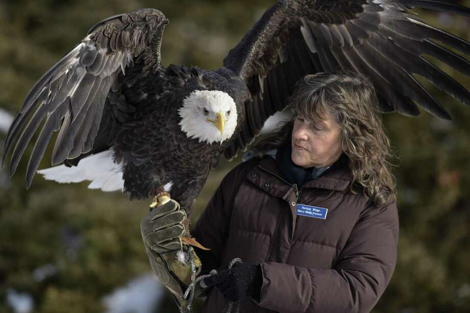 Mary-Beth Kaeser, owner of Horizon Wings a raptor rehabilitation & education organization, presents Atkar, a 7-year-old bald eagle, during a presentation at the Opening Day Celebration of the Shepaug Dam Bald Eagle Observation Area on Saturday, December 16, 2017, in Southbury, Conn. Photo: H John Voorhees III / Hearst Connecticut Media / The News-Times