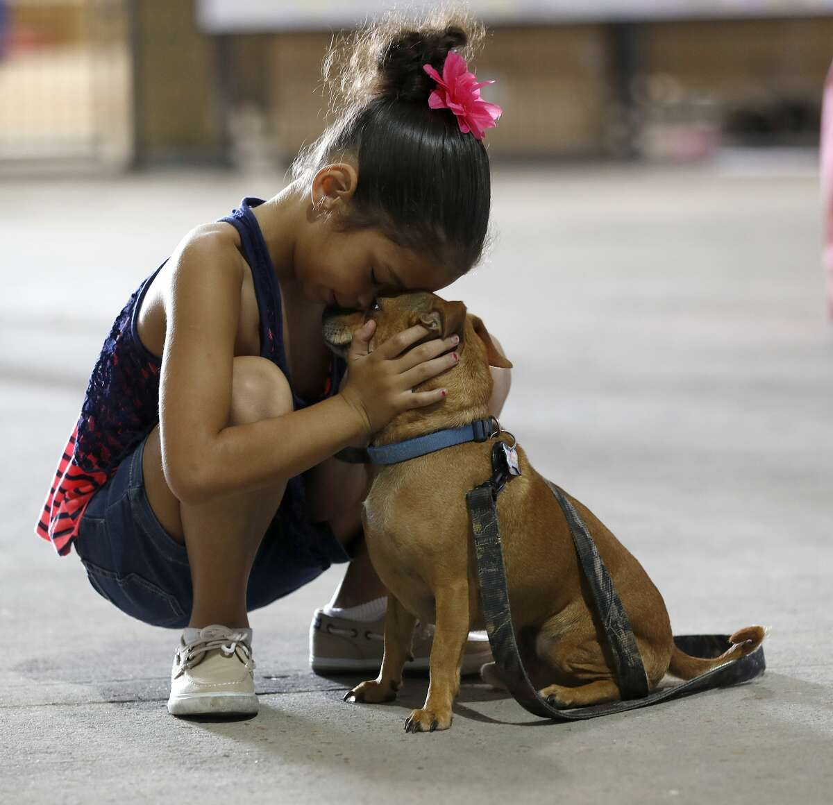 Reniah Knight, 7, of Vidor, hugs her dog, Buster, who they located at the Houston SPCA, but they continued to look for thier two other missing dogs in the Pet Reunion Pavilion inside of NRG Arena, Wednesday, Sept. 13, 2017, in Houston. They found one of their dogs at the SPCA, but the other two who were supposed to be there, where missing. Best Friends Animal Society, based in Utah, has partnered with the Harris County Public Health's Animal Shelter, Austin Pets Alive!, Houston Pets Alive!, and Houston PetSet. This will act as a hub for families trying to locate their pets displaced by Tropical Storm Harvey.