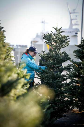Delancey Street Christmas Trees.Prices For Real Christmas Trees Rise Amid Nationwide