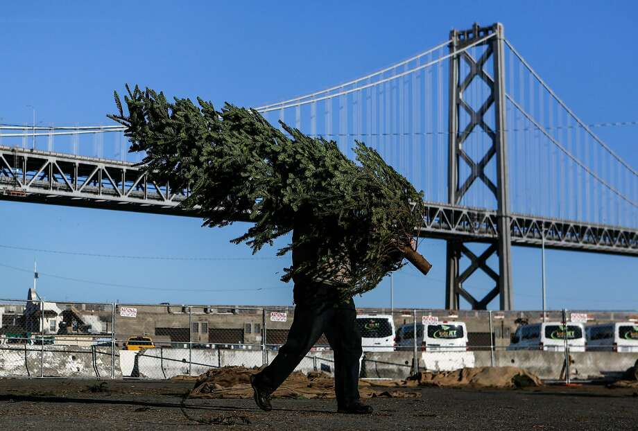 A worker at the Delancey Street Foundation's Christmas tree lot carries a fir across the lot, located at Pier 32 in San Francisco. Photo: Amy Osborne, Special To The Chronicle