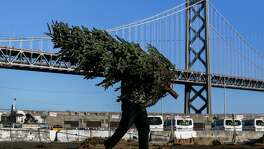 A worker at the Delancey Christmas Tree Lot carries a tree across the lot on Saturday, December 16, 2017 in San Francisco, California.