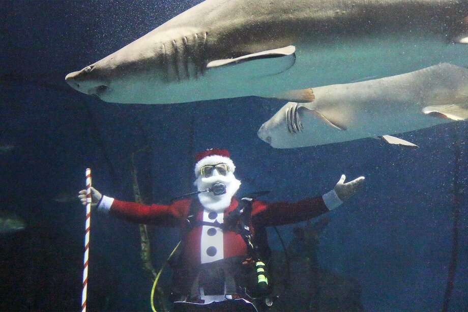 Santa will go just about anywhere to spread Christmas cheer — including swimming with sharks at the Maritime Aquarium in Norwalk. Photo: Maritime Aquarium / Contributed Photo
