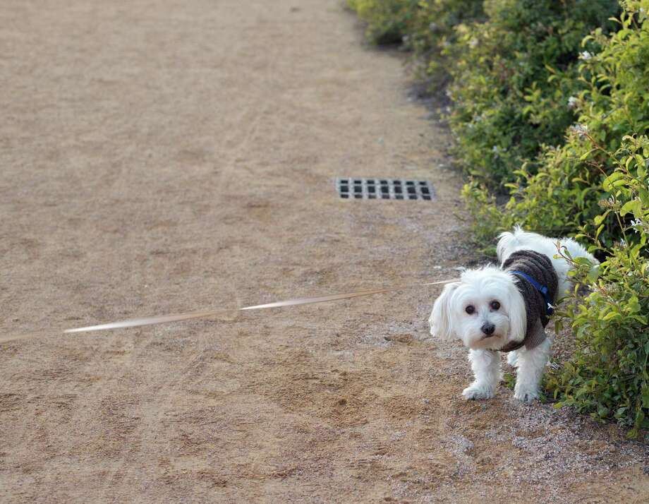 It's not always OK to let dogs pee in everyone's yards. Photo: Ioannis Tsotras /Getty Images / Ioannis Tsotras