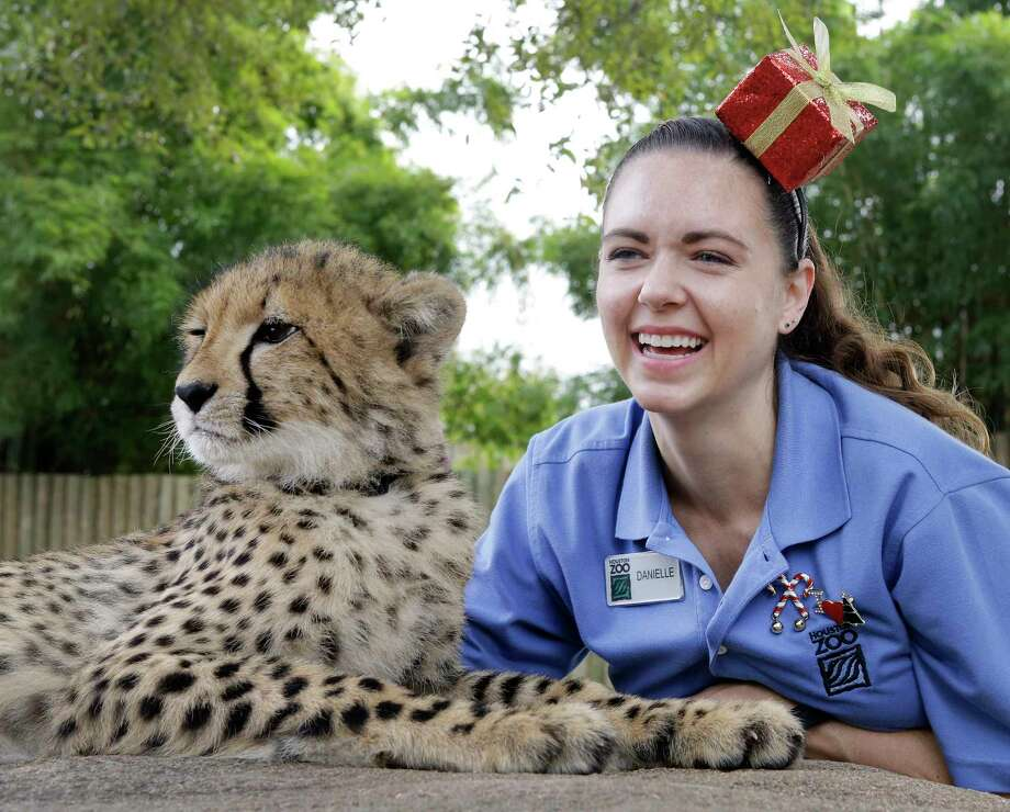 Danielle Swopes, zookeeper carnivore, poses with Dinari, a cheetah cub, at the Houston Zoo, 6200 Hermann Park Dr., Monday, Dec. 18, 2017, in Houston. ( Melissa Phillip / Houston Chronicle ) Photo: Melissa Phillip, Houston Chronicle / © 2017 Houston Chronicle