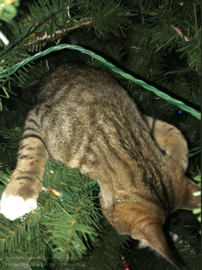 'Tis the season for cats climbing inside Christmas trees. Photo: Twitter/@merrykensmas