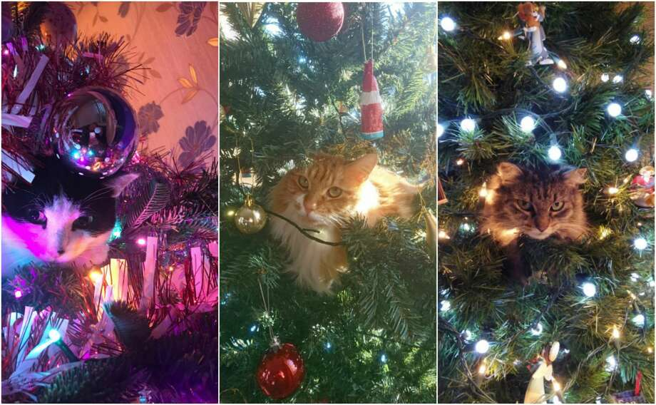 'Tis the season for cats climbing inside Christmas trees. Photo: Twitter