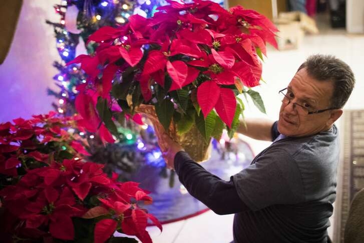 Juan Rodriguez accommodates Christmas poinsettias as he and his family prepare their home for the holidays, in Houston.