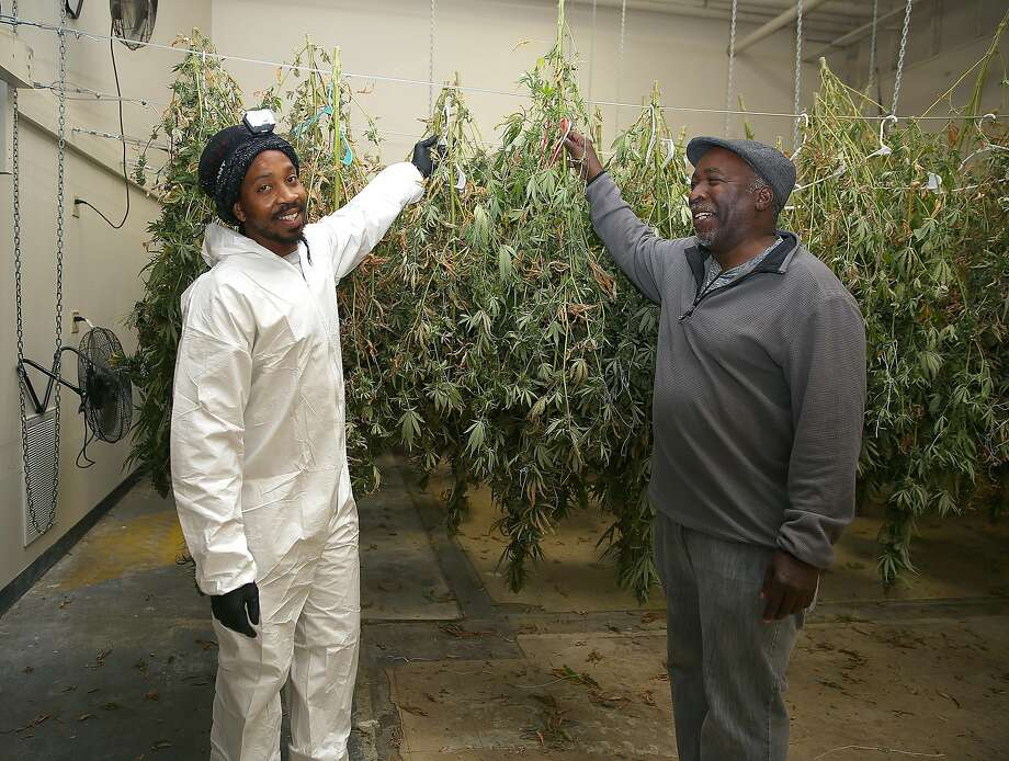 Jahful Price (left) and his uncle Charles Byrd of Nine Mile Tribe hang cannabis to dry at Bloom Innovations, a horticulture consulting and management firm that distributes cannabis products such as seeds, flowers, concentrates, infused edibles and more under the brand name NUG, on Wednesday, December 13, 2017, in Oakland, CA. Photo: Liz Hafalia, The Chronicle