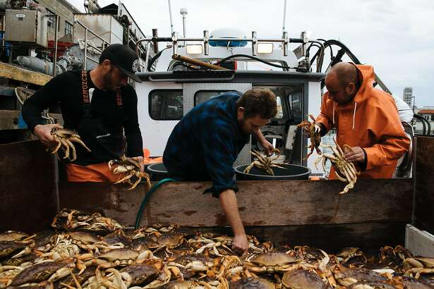 From the left, Brendan Moore, Captain Aaron Lloyd and John Buich unload the Dungeness crab by hand at Pier 45 in San Francisco, Calif. Wednesday, November 15, 2017.