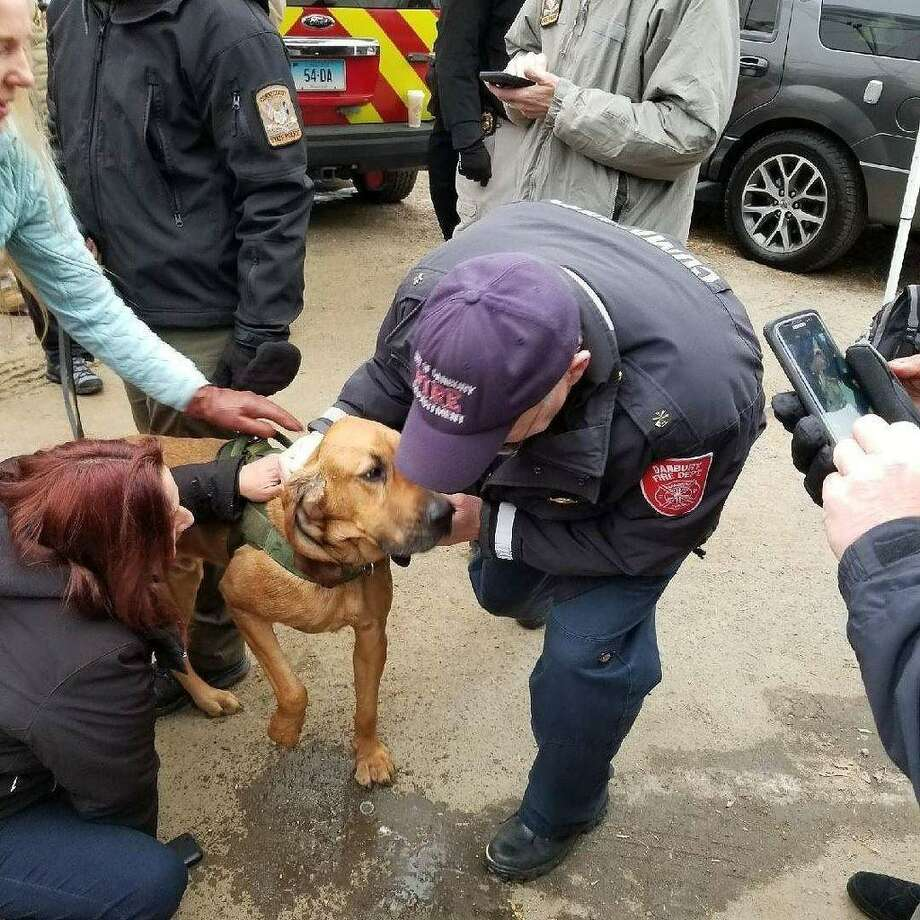 State Police K9 Texas, who went missing during a search in Danbury on Wednesday, Dec. 20, 2017, was found Friday morning.  Photo: Connecticut State Police, Contributed