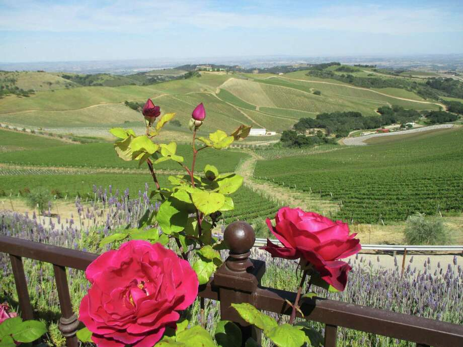 The mountains and wineries around central California's Paso Robles wine country are worth a leisurely visit. Smell the roses at Daou Vineyards and Winery. Photo: Robin Soslow / For The Express-News