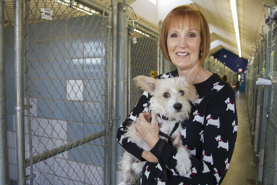 Kathy Davis, Texas Humane Legislation Network board member and former Animal Care Services director, visits Jingle at ACS. Texas Humane Legislation Network has created a PAC to allow it to raise and spend funds for candidates and work to turn out voters on their behalf. Photo: Alma E. Hernandez /For The San Antonio Express News