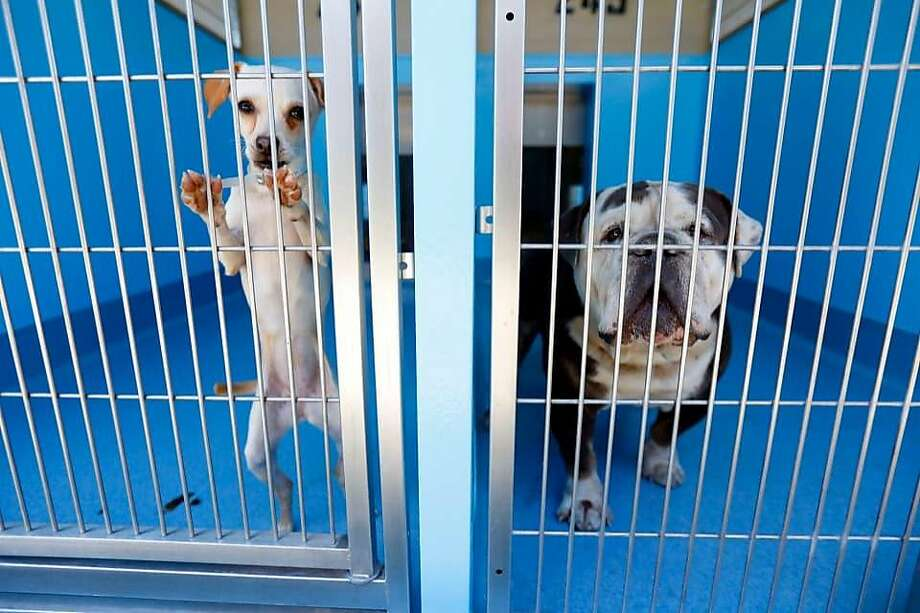 Dogs at a Los Angeles-area animal shelter. A proposal making its way through the Los Angeles Animal Services commission could require that all dogs in the city's public shelters be fed an all-vegan diet. Photo: Patrick T. Fallon