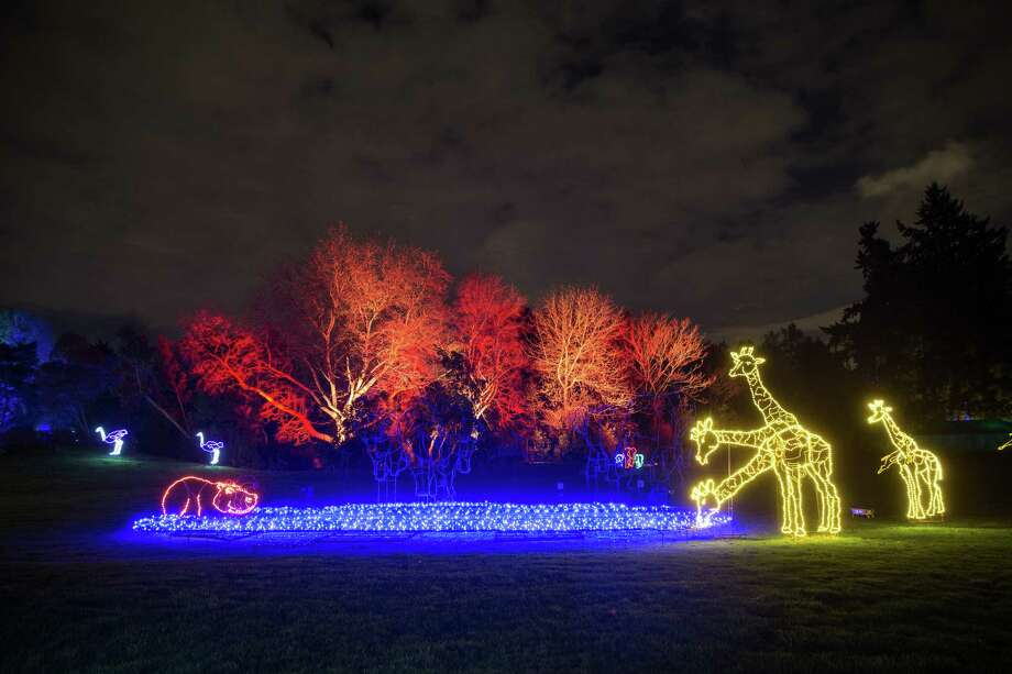 A giraffe-shaped light display looks as though it has three heads during WildLights at Woodland Park Zoo on Friday, Dec. 22, 2017. Photo: GRANT HINDSLEY, SEATTLEPI.COM / SEATTLEPI.COM