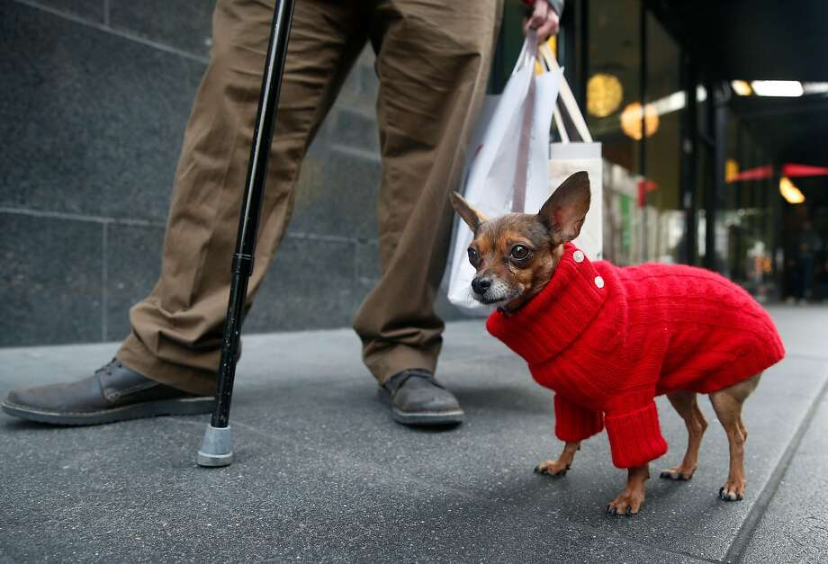 San Franciscans know that in the summer, sweaters are often a necessity. Photo: Paul Chinn, The Chronicle