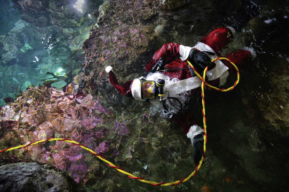 Volunteer diver Tom Griffith floats in his Santa Claus costume before a seasonal Christmas dive show at the Seattle Aquarium's Window on Washington, Saturday, Dec. 23, 2017.