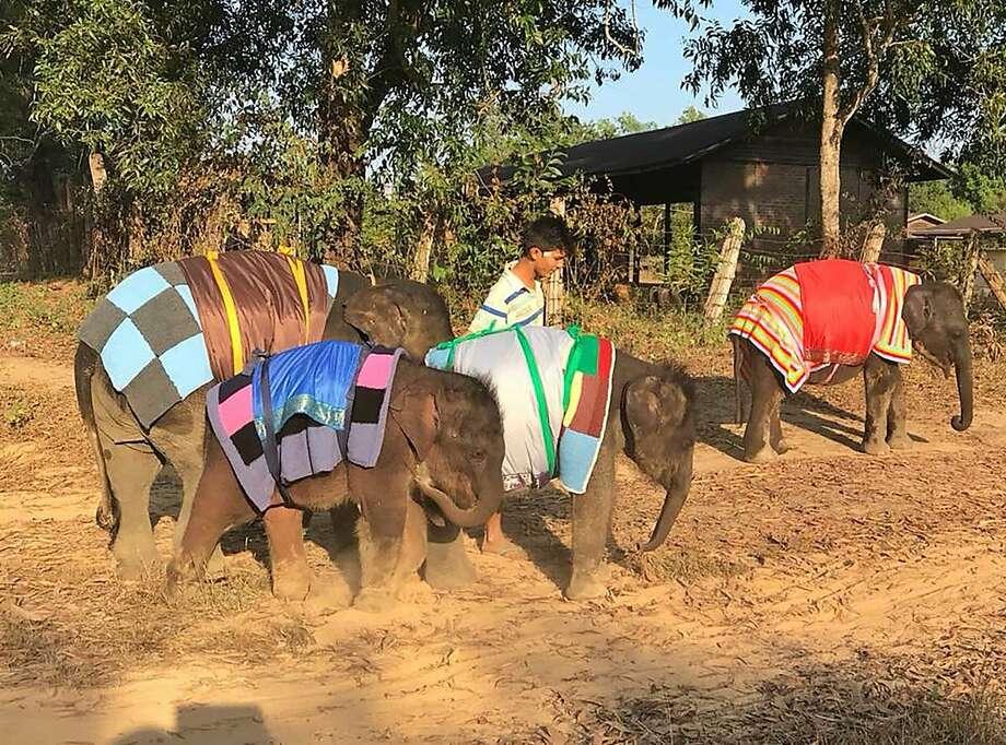 how do you keep an elephant warm knit a giant blanket sfgate