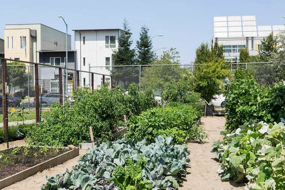 The Acta Non Verba farm is located in Tassafaronga Recreation Center in East Oakland.