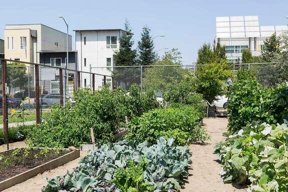 The Acta Non Verba farm is located in Tassafaronga Recreation Center in East Oakland.