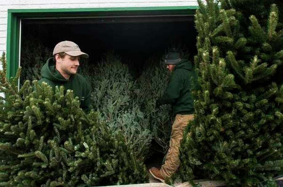 FILE: Brad Belson, left, and Jacob Cook, both of Midland, organize trees at Doumel Tree Farms, 3765 Rockwell Drive, on Dec. 6, 2017. (Katy Kildee/kkildee@mdn.net)
