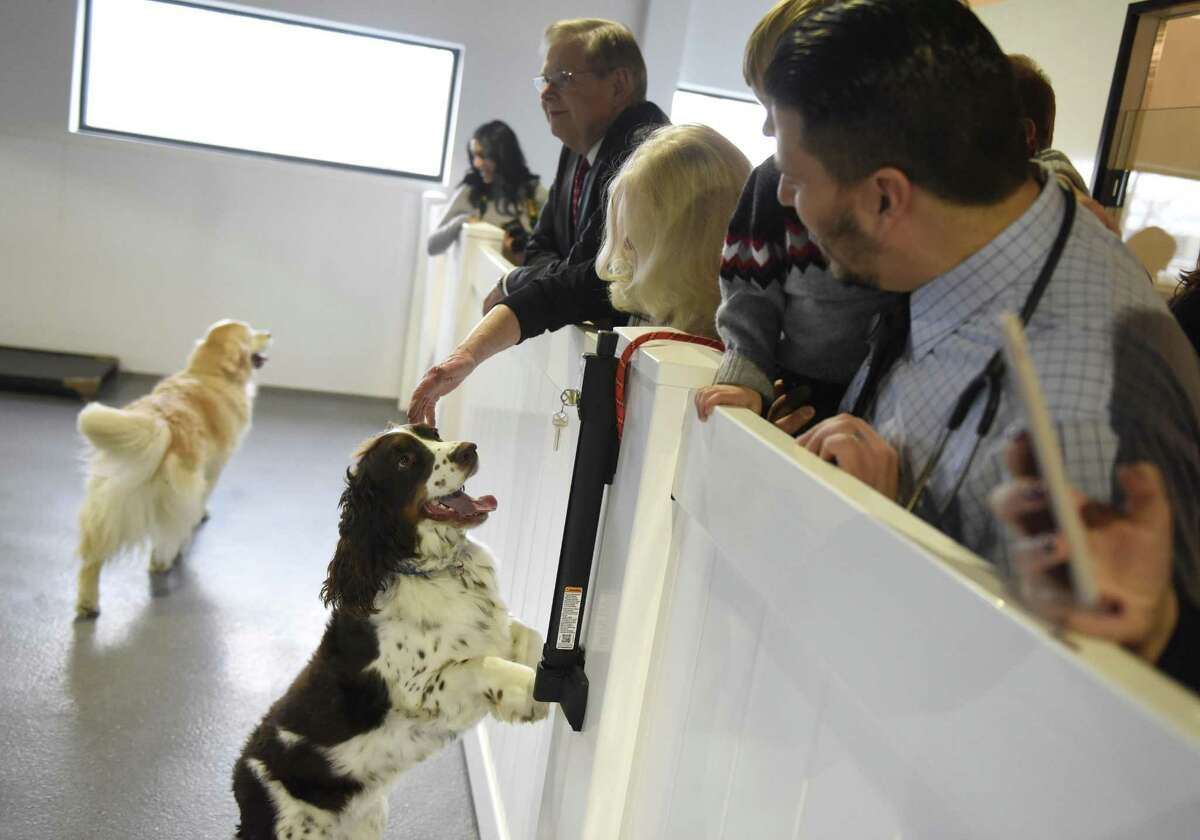 Dogs greet guests during a tour Spot On Veterinary Hospital & Hotel at 184 Selleck St., in Stamford, Conn., on Wednesday, Dec. 20, 2017.