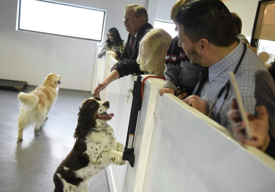 Dogs greet guests during a tour Spot On Veterinary Hospital & Hotel at 184 Selleck St., in Stamford, Conn., on Wednesday, Dec. 20, 2017. Photo: Tyler Sizemore / Hearst Connecticut Media / Greenwich Time