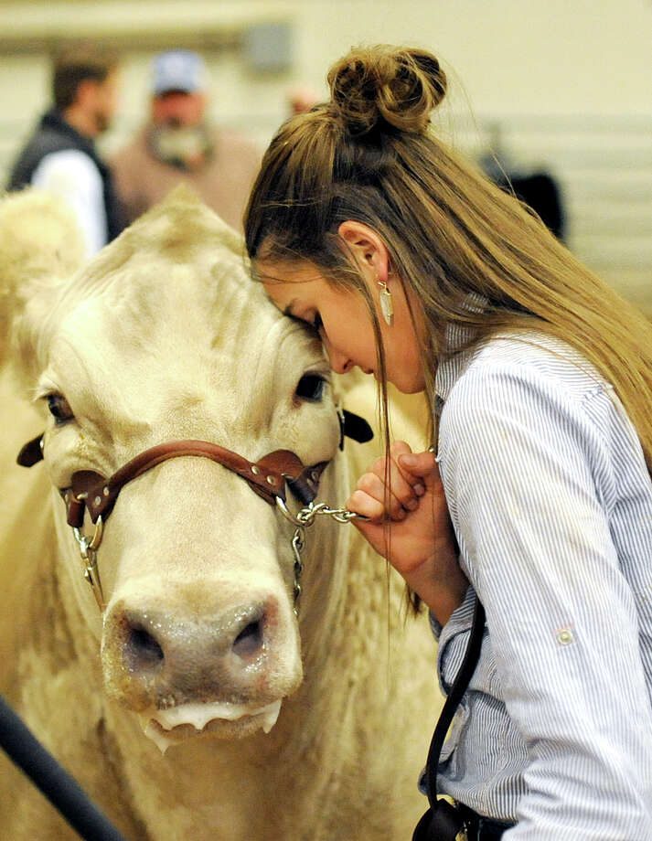 """CassieJo Bennett, of Greenwood, gives her steer """"Woody"""" some affection after winning Grand Champion in the exotic class during the Midland County Livestock Association Annual Show on Friday, Jan. 13, 2017, at Horseshoe Arena in Midland.  James Durbin/Reporter-Telegram Photo: James Durbin"""