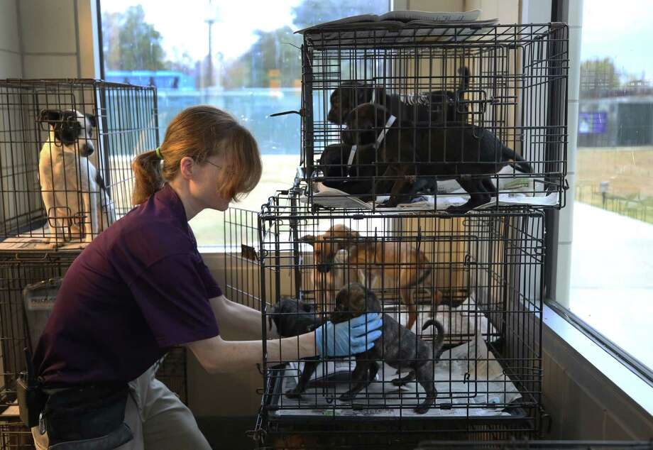 Animal Care Technician Christina Stowe grabs two recently adopted puppies to get fixed at the BARC Animal Shelter & Adoptions Monday, Dec. 18, 2017, in Houston. Photo: Godofredo A. Vasquez, Houston Chronicle / Godofredo A. Vasquez