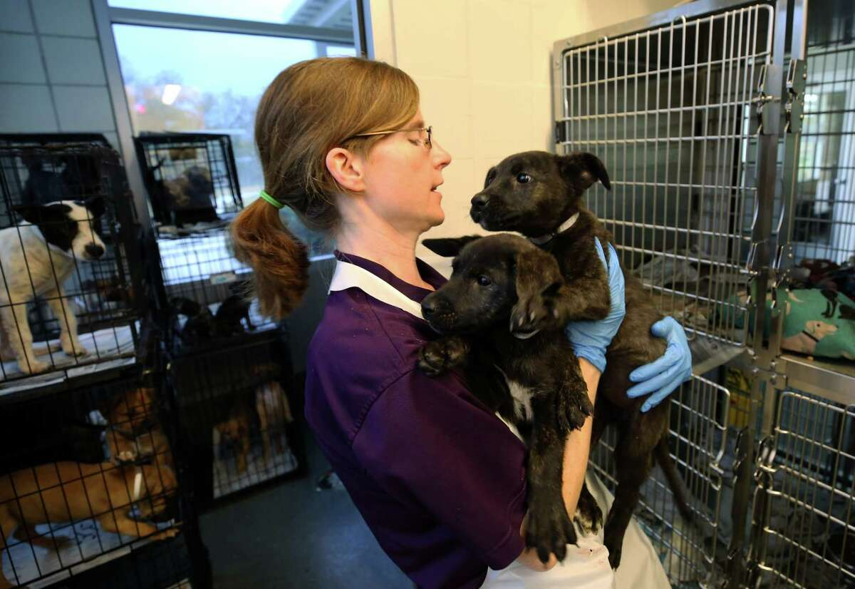 Animal Care Technician Christina Stowe carries two recently adopted puppies before taking them to get fixed at the BARC Animal Shelter & Adoptions Monday, Dec. 18, 2017, in Houston.