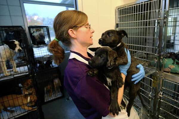 Houston's once-troubled animal shelter euthanizing fewer