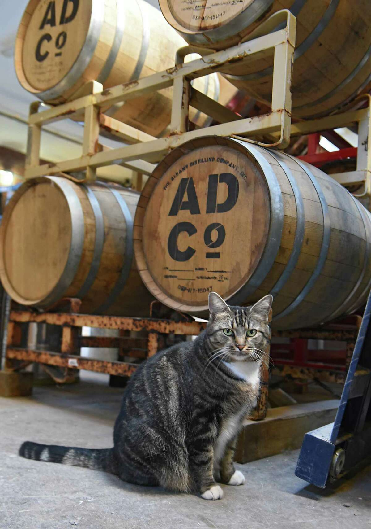 Montgomery the cat at the Albany Distilling Company on Thursday, Dec. 21, 2017 in Albany N.Y. (Lori Van Buren / Times Union)