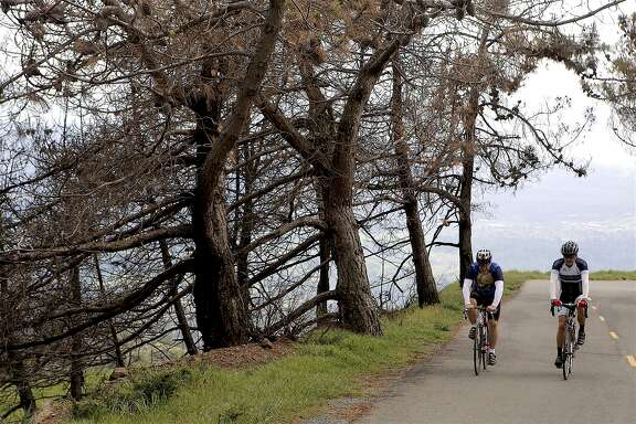 Two cyclists ride up Mount Diablo, where a road safety program reduced the average number of cycling accidents per year in half, from an average of 23 to 11