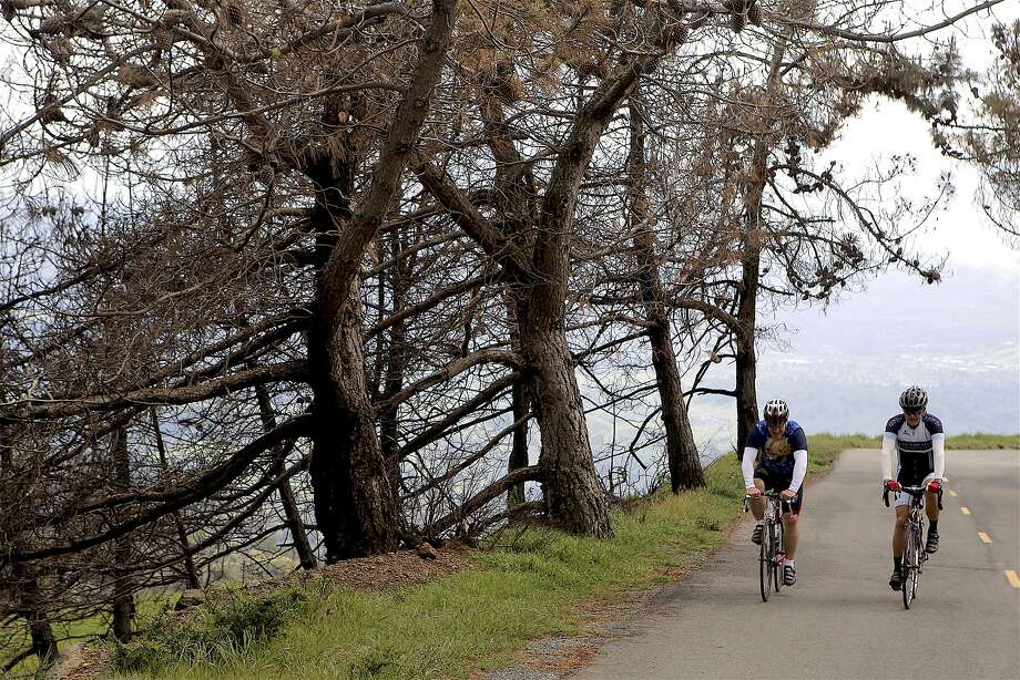 Two cyclists ride up Mount Diablo, where a road safety program reduced the average number of cycling accidents per year in half, from an average of 23 to 11. Photo: Tom Stienstra, Tom Stienstra / The Chronicle