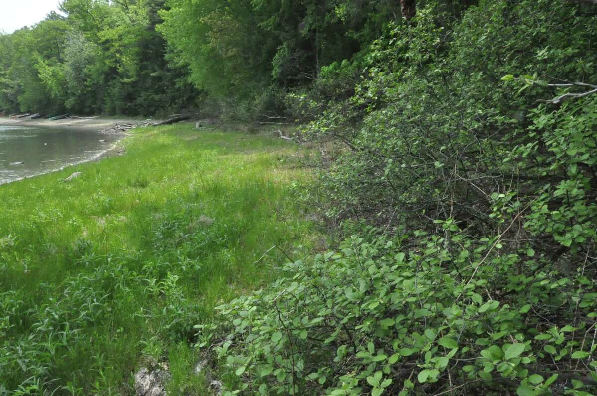 As Moreau Lake retreated this year, grass is taking over what was once the sandy lake bottom. (U.S. Geological Survey)