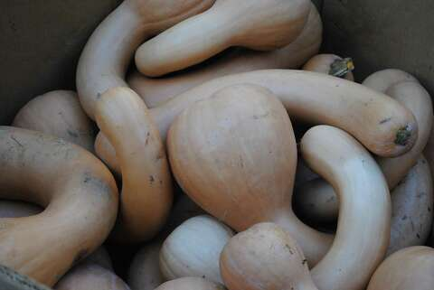 Miraculous New Haven Soup Kitchen Receives Large Squash Donation From Interior Design Ideas Clesiryabchikinfo